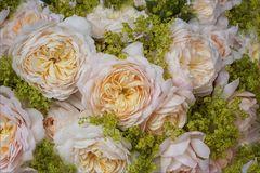 """Tête-à-tête der """"Crocus Rose"""" - Emanuel...."""