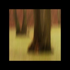 Tümpelbäume