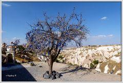 Türkei - Göremetal - Baum mit Glückssymbolen