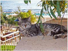 türkische 5 - Sterne- Katze