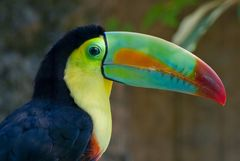 Tukan der Farbprotz