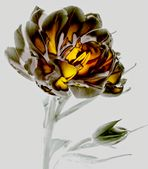 Tulip-Art