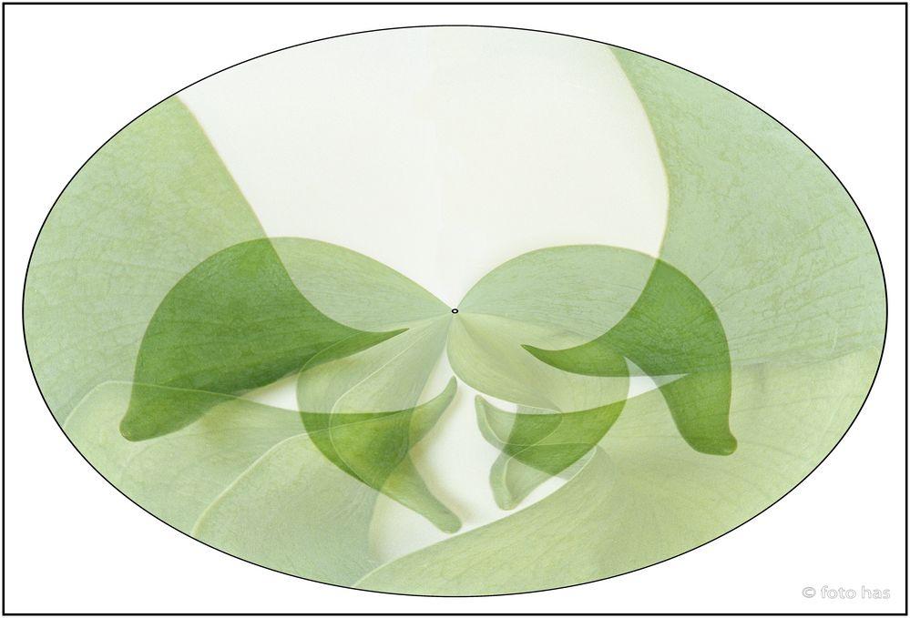 Tulip art nr.1