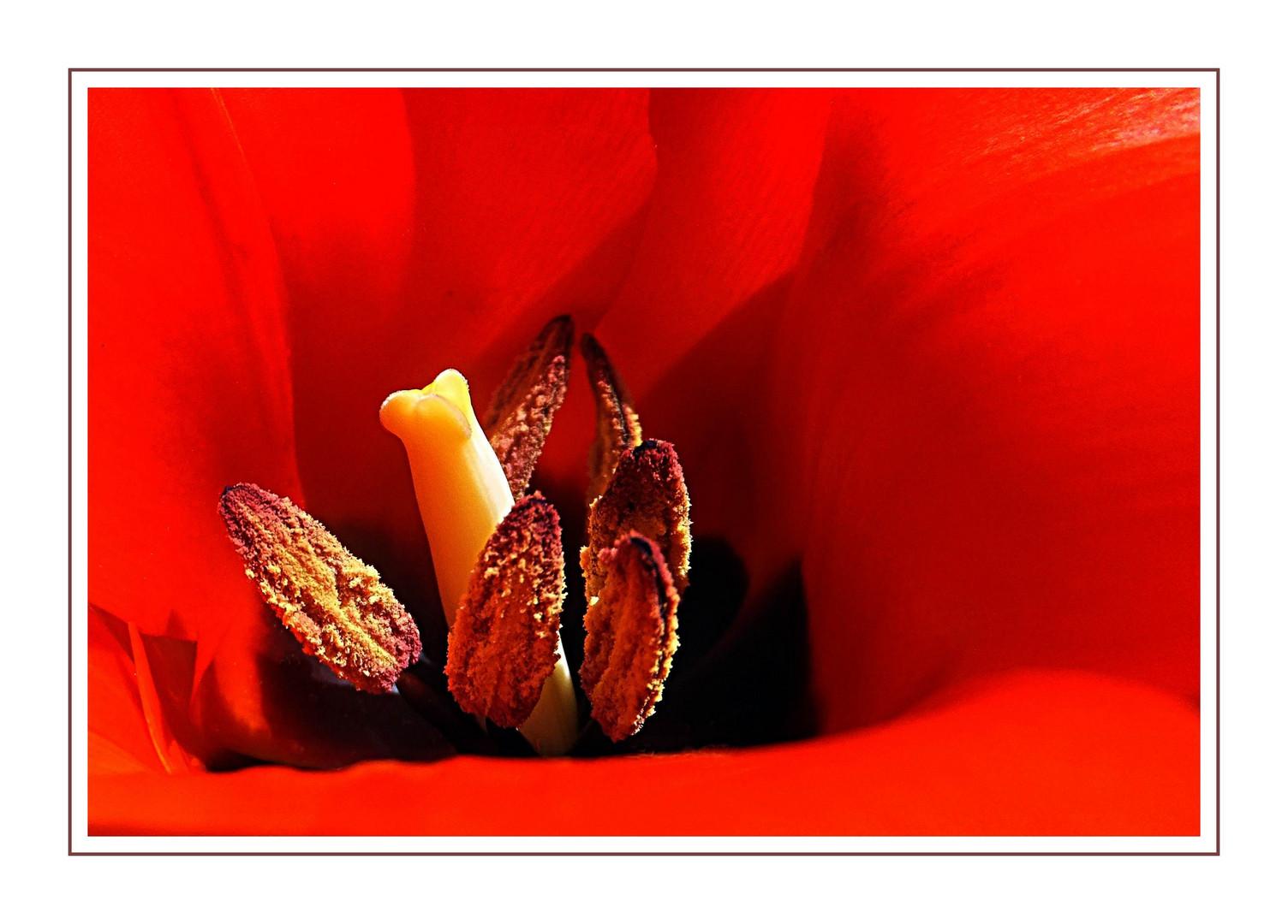 Tulip incognito