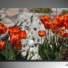 Tulipanes naranjas...