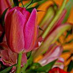 Tulipano variopinto.