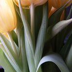 TULIP(coloured)