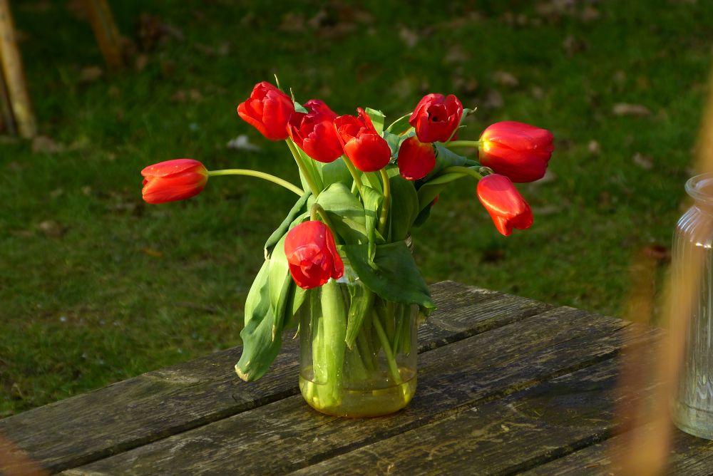 Tulips in a glass jar
