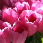Tulips...so many...