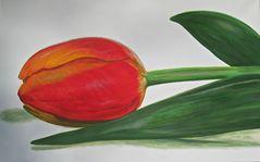 Tulpe 73 x 116 cm