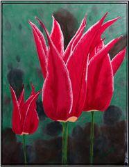 Tulpe aus dem eigenen Garten