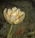 Tulpe - gefüllt...