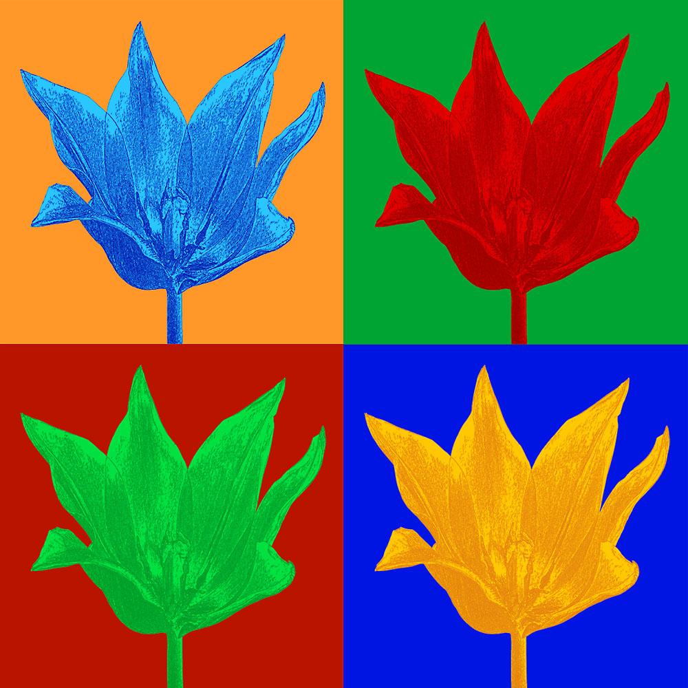 Tulpe im Stil von Andy Warhol