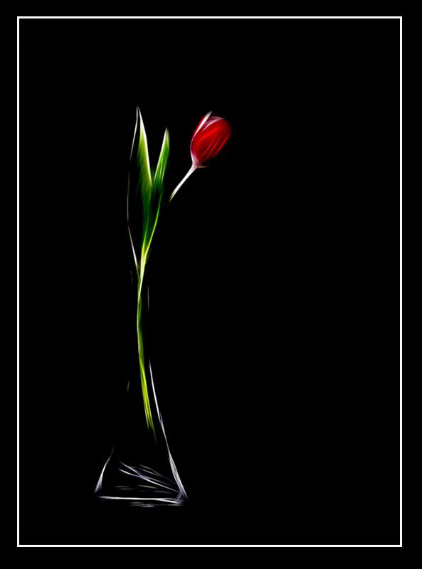 Tulpe in Vase