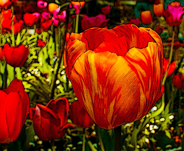 Tulpe kreativ