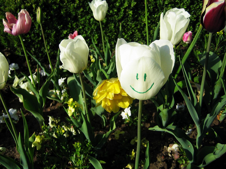 Tulpe mit Gesicht