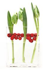 Tulpen 087