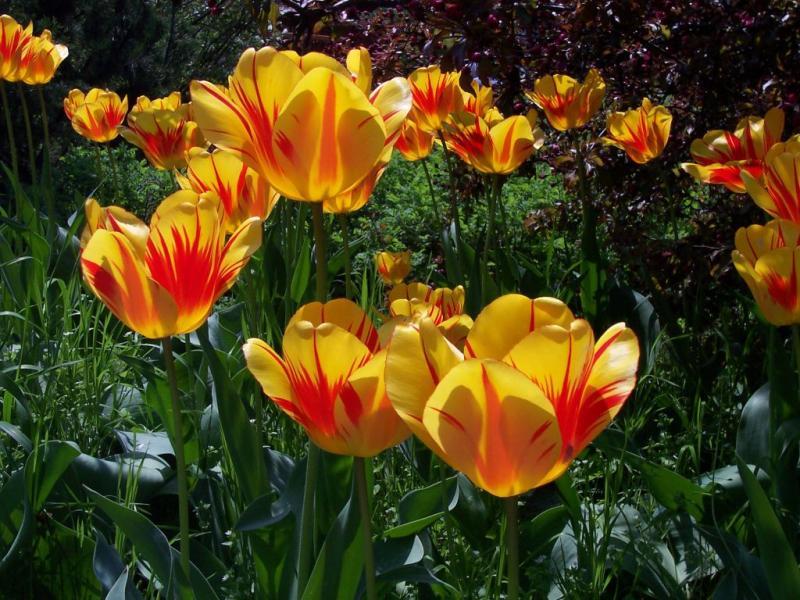 Tulpen 2004
