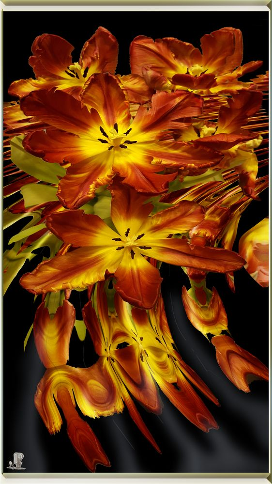 Tulpen auf Feuerwasser