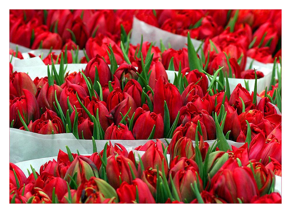 Tulpen aus Amsterdam....