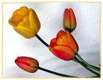 Tulpen aus dem Schrebergarten