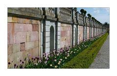 Tulpen aus Drottningholm
