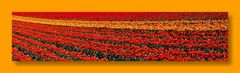 Tulpen aus..........