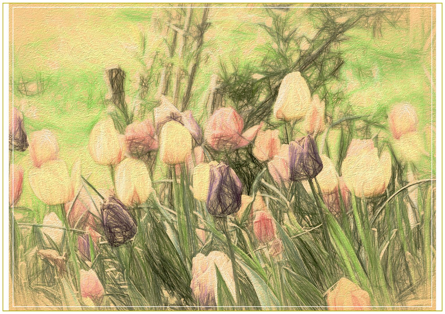 Tulpen  de mi jardin 2017