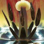 Tulpen-Einblicke - analog oder digital?