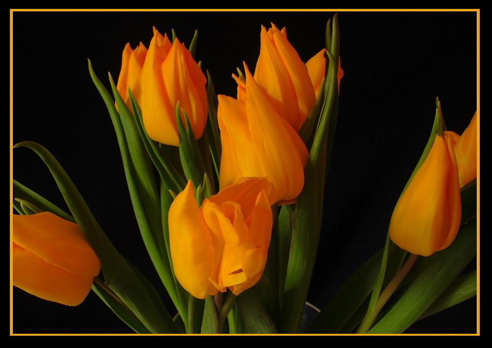 Tulpen für unsere Damen & Mädels in der FC und auch allen Anderen, wenn`s denn gefällt.