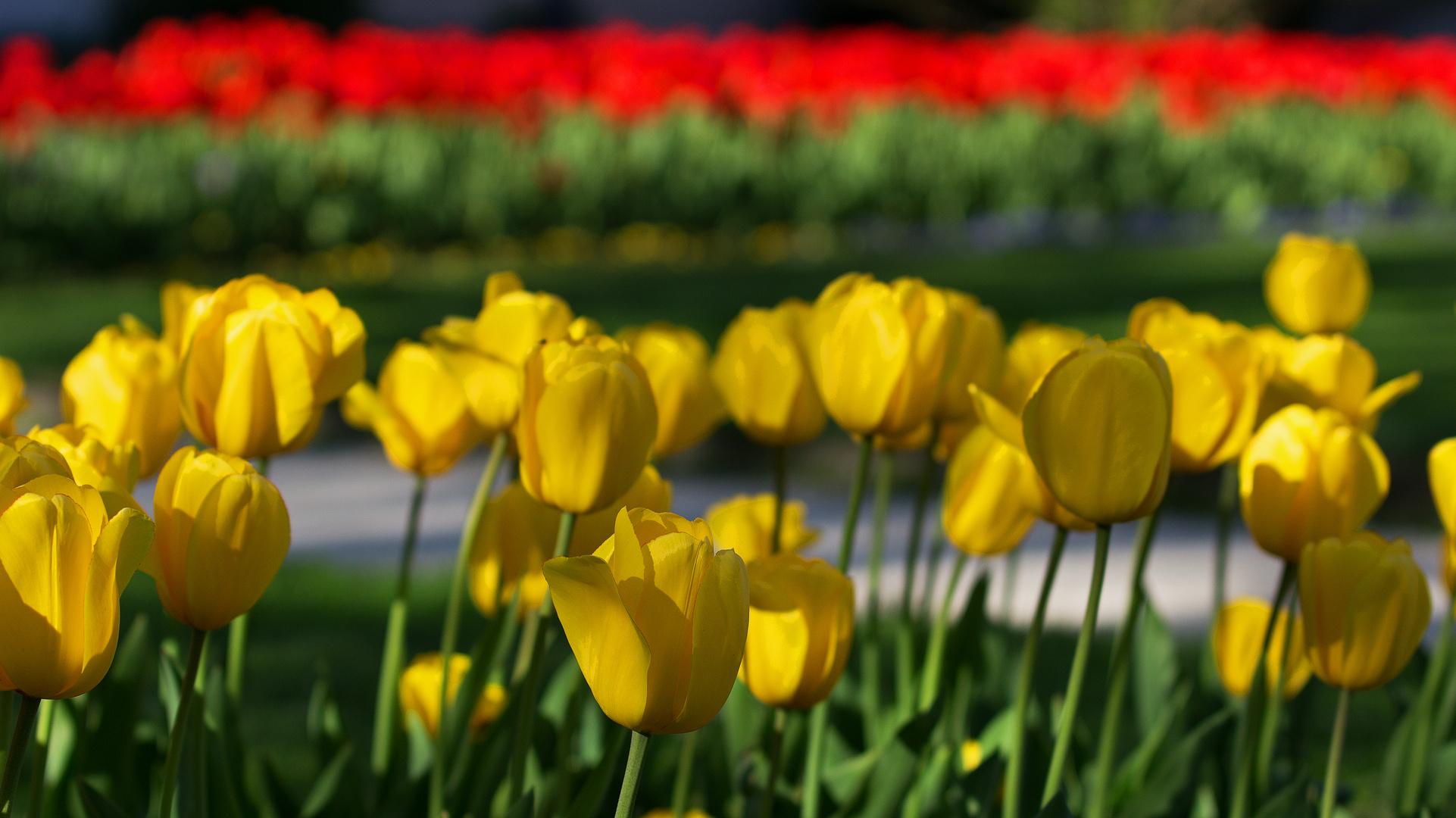 Gelb Und Rot