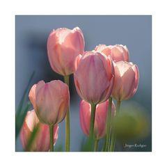 tulpen gerahmt