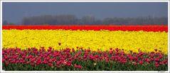 ~ Tulpen gibts.... ~