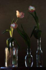Tulpen III oder 3 Tulpen