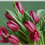 Tulpen im Grünen