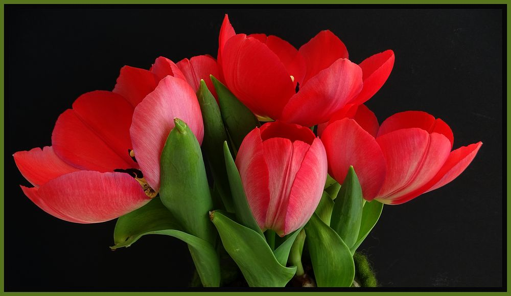 tulpen im topf foto bild pflanzen pilze flechten bl ten kleinpflanzen projekte. Black Bedroom Furniture Sets. Home Design Ideas