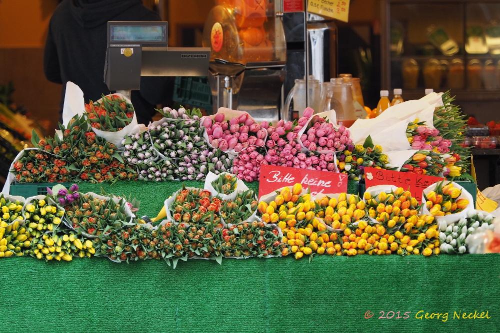 Tulpen in Brühl