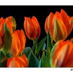 Tulpen in der Vase...