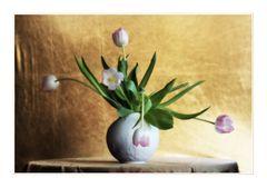 Tulpen - in Farbe und bunt