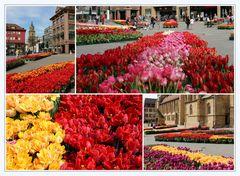 Tulpen in Heilbronn