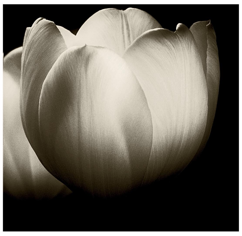 Tulpen in SW