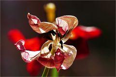 Tulpen-Kunstwerk