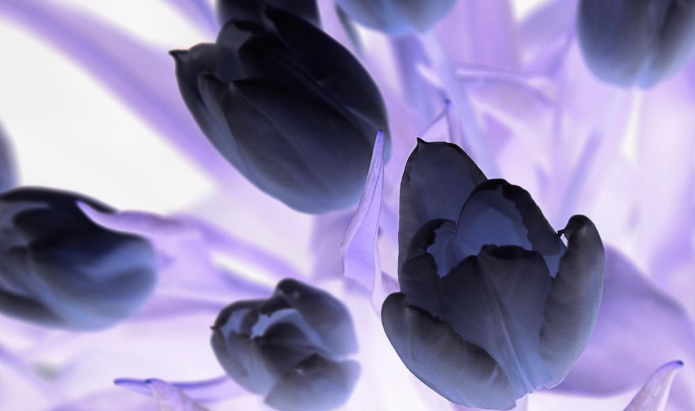 Tulpen mal anders dargestellt