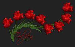 Tulpen-Reigen