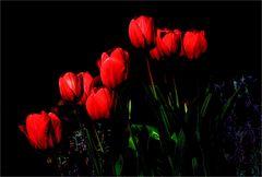 Tulpen Schönheiten