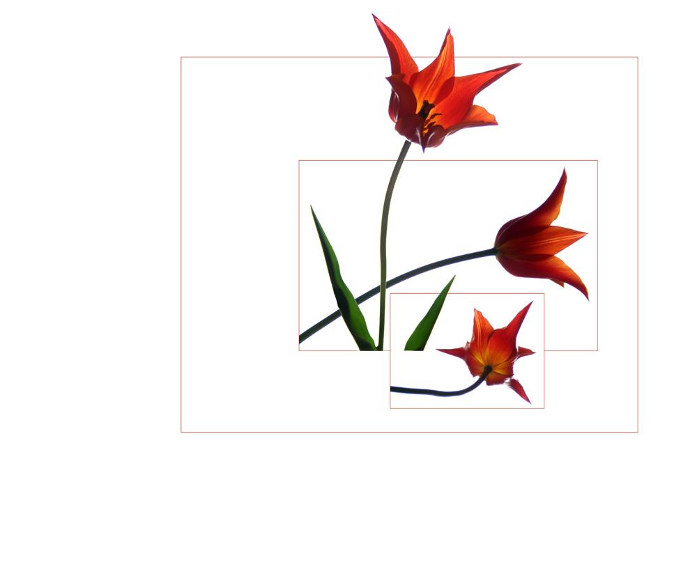 tulpen serie 2