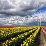 Tulpen und Aprilwetter