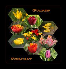 Tulpen-Vielfalt