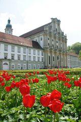 Tulpen vor der Kirchenfassade in Fürstenfeld, Fürstenfeldbruck, Bayern