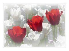 Tulpen zum Muttertag
